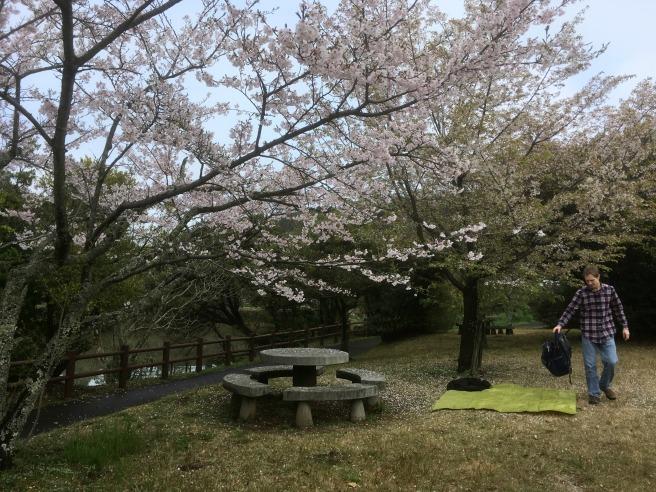 2017 Sakura Fog