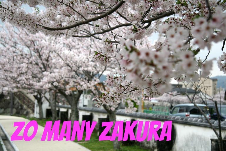 2017 Zakura Title.jpg